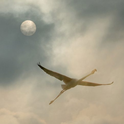 Freedom in the sky - Barbara Dall'Angelo