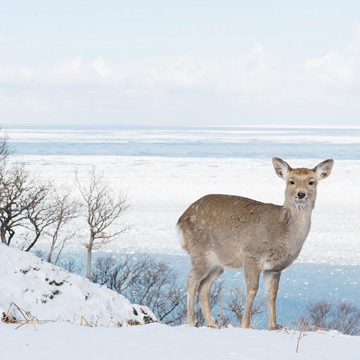 Deer-on-the-Hill-barbara-dallangelo