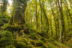 il grande sonno della foresta umbra - Barbara Dall'Angelo